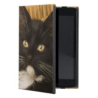 Chaton aux cheveux courts noir et blanc sur le étui iPad mini