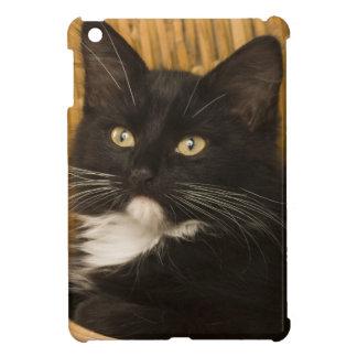 Chaton aux cheveux courts noir et blanc sur le étuis iPad mini