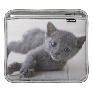 Chaton bleu russe poches iPad