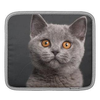 Chaton britannique de Shorthair (3 mois) Poches Pour iPad