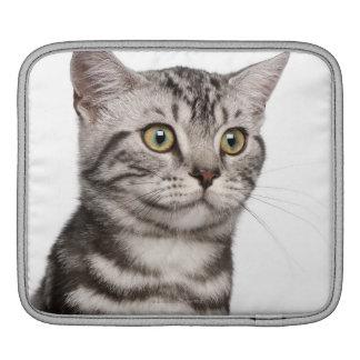 Chaton britannique de Shorthair (4 mois) Poches Pour iPad