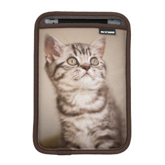 Chaton britannique gris mignon de cheveux courts housses iPad mini