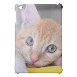 chaton étuis iPad mini
