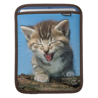 Chaton dans l'arbre poches iPad