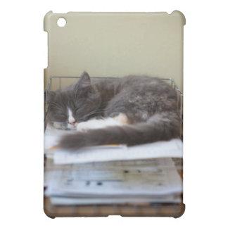 Chaton dans un bureau dans la boîte coque pour iPad mini