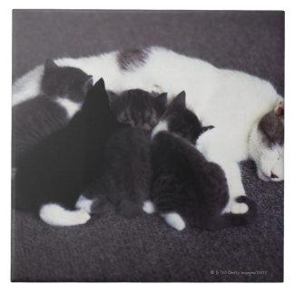 chaton de alimentation de chat grand carreau carré