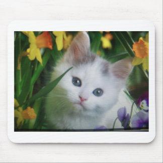 chaton de bébé tapis de souris
