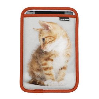 Chaton de gingembre housse pour iPad mini