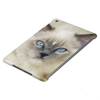 Chaton de Ragdoll Coque iPad Air