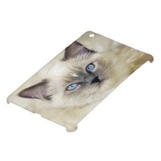 Chaton de Ragdoll Coques Pour iPad Mini