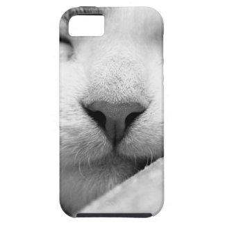 Chaton de sommeil coques iPhone 5