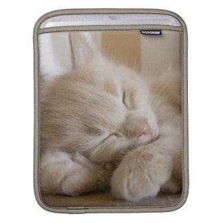 Chaton de sommeil poches pour iPad