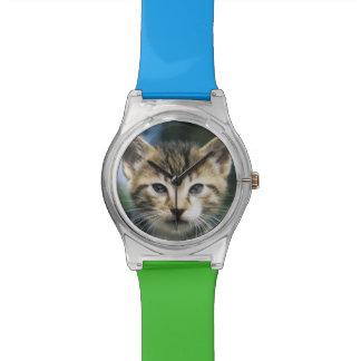 Chaton dehors montres bracelet