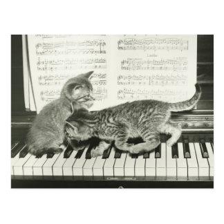 Chaton deux jouant sur le clavier de piano, (B&W) Carte Postale