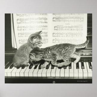 Chaton deux jouant sur le clavier de piano, (B&W) Poster