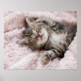 Chaton dormant sur la serviette poster