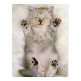 Chaton dormant sur un tapis pelucheux blanc, haut carte postale