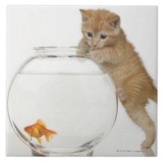Chaton essayant d'en avoir après un poisson rouge grand carreau carré