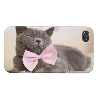 Chaton gris mignon coques iPhone 4