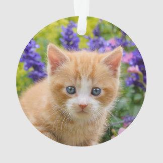 Chaton mignon de chat de gingembre en portrait
