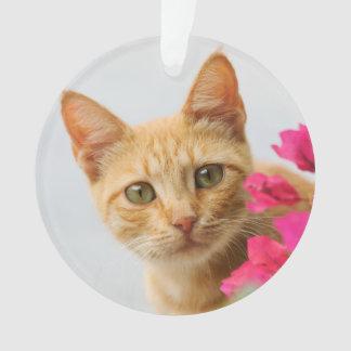 Chaton mignon de chat de gingembre vous observant