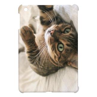 Chaton mignon de chat du Bengale repéré par Brown