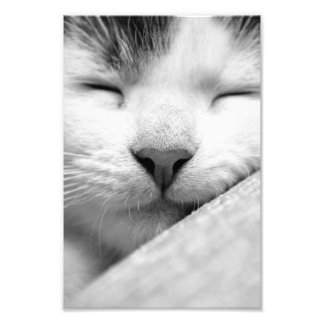 Chaton mignon de sommeil photo d'art