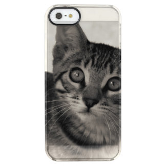 Chaton mignon du Bengale Coque iPhone Clear SE/5/5s
