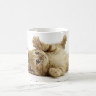 Chaton mignon mug