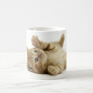 Chaton mignon mug blanc