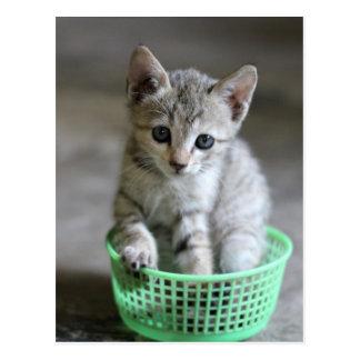 Chaton mignon se reposant dans un panier vert carte postale