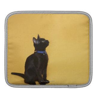 Chaton noir dans le collier poches iPad