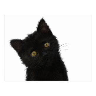 Chaton noir de Luna Bella Carte Postale
