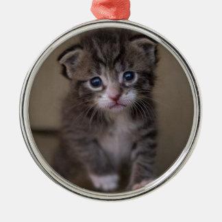 chaton ornement rond argenté