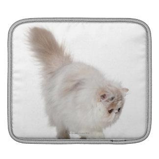 Chaton persan (3 mois) poches iPad