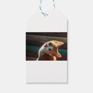 Chaton regardant en arrière au-dessus de son étiquettes-cadeau