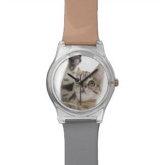 Chaton se tenant sur les pattes arrières montres bracelet