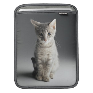 Chaton tigré bleu housses iPad