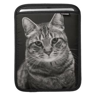 Chaton tigré noir poches pour iPad