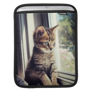 Chaton tigré observant la fenêtre poches pour iPad