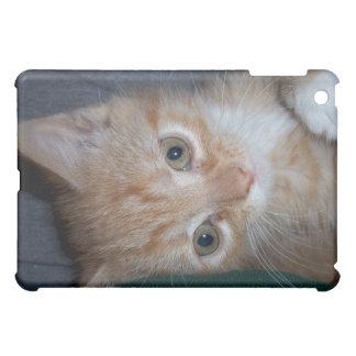 Chaton tigré orange étui iPad mini