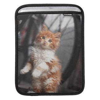 Chaton tigré orange housses iPad