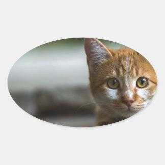 Chaton tigré orange sticker ovale
