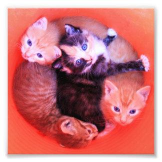 Chatons colorés mignons câlins adorables dans le photos sur toile