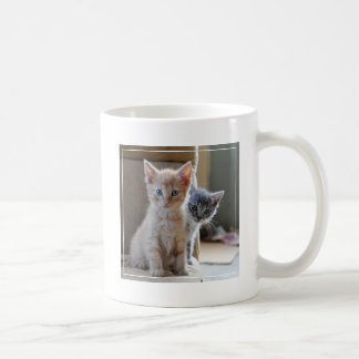 Chatons curieux mug