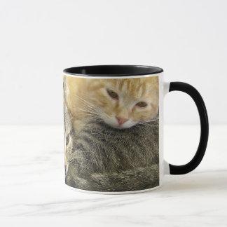 Chatons d'abri mug