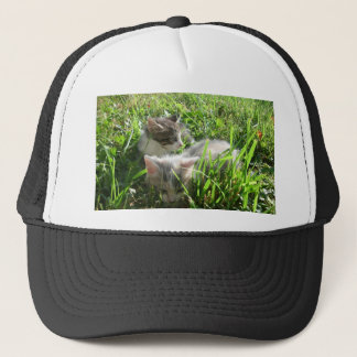 Chatons les explorant casquette