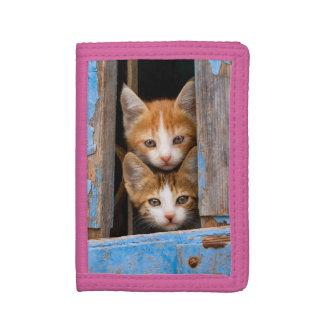 Chatons mignons de chat dans une photo vintage