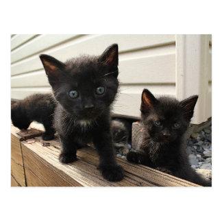 Chatons noirs mignons dans le pays carte postale