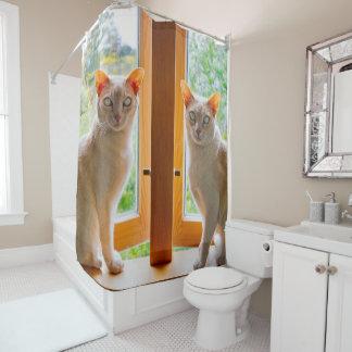 Chats birmans Kate et rideau en douche de chat de